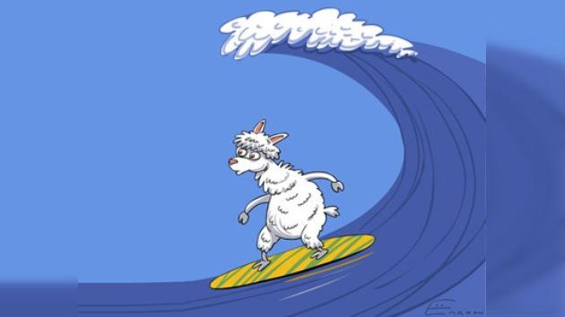 Alpaca surfista domina las olas del mar y genera oleadas de críticas