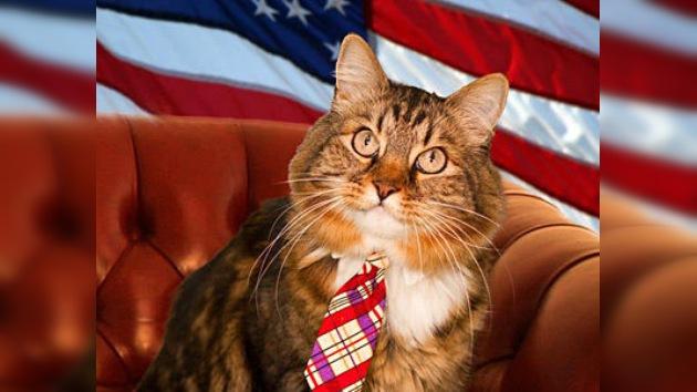 Un gato como candidato independiente al Senado de EE. UU.