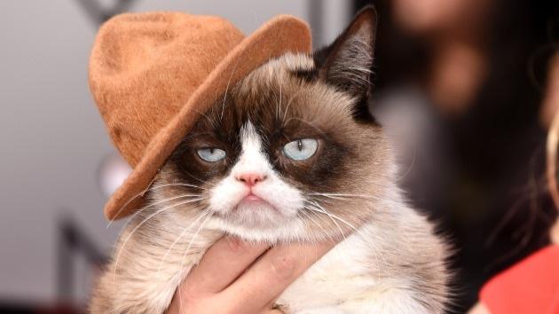 Estudio: Amantes de los gatos son más inteligentes que quienes tienen perros