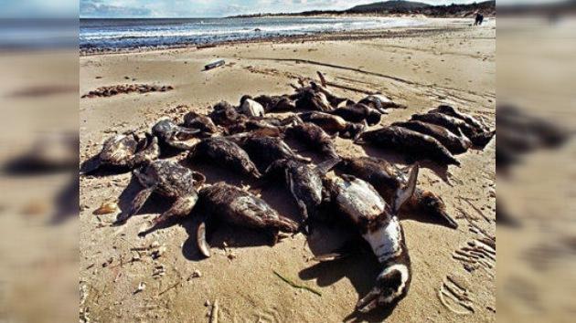 Hallan numerosos animales muertos en playas de Uruguay