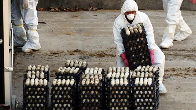 Corea del Sur, en alerta por un brote de gripe aviar, sacrificará cerca de 2 millones de aves