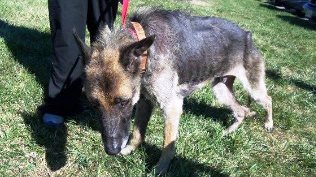 Rescatan a un perro que estuvo encadenado a un árbol durante cuatro años por su dueño