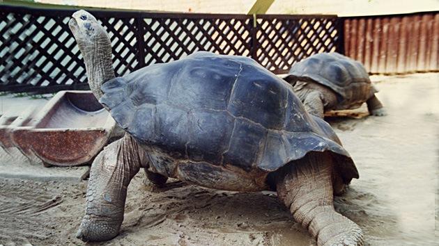 Ni los afrodisiacos logran salvar la unión animal más duradera del mundo
