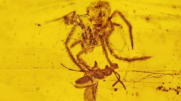 Emboscada mortal de hace 100 millones de años atrapada en ámbar: la araña vs avispa