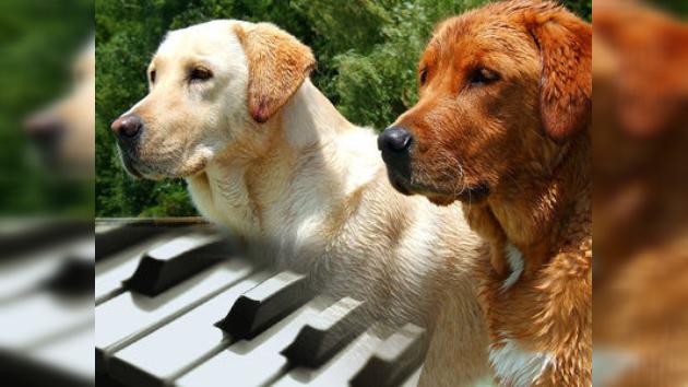 videos gratis de mujeres con animales: