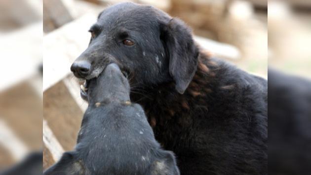 Matanza masiva de animales en Kiev en vísperas de la Eurocopa 2012