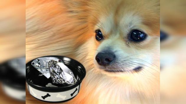 """Un perrito """"almuerza"""" diamantes por valor de 10.000 dólares"""