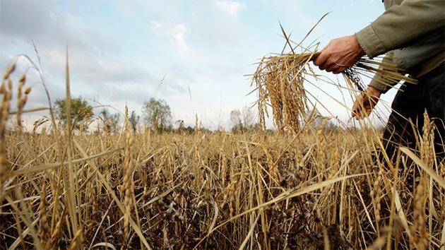La nueva normativa de la Unión Europea sobre los OGM: ¿Un 'caballo de Troya'?