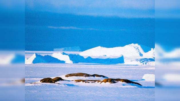La Antártida acogerá en febrero la estación correctora para el 'GPS ruso'