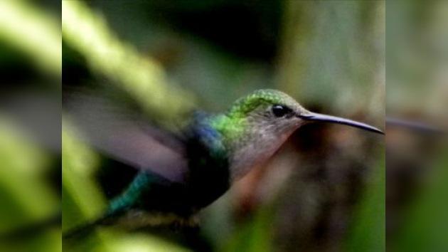 Las especies desaparecen más rápido que evolucionan