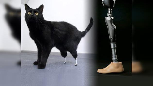 Óscar, el primer gato biónico