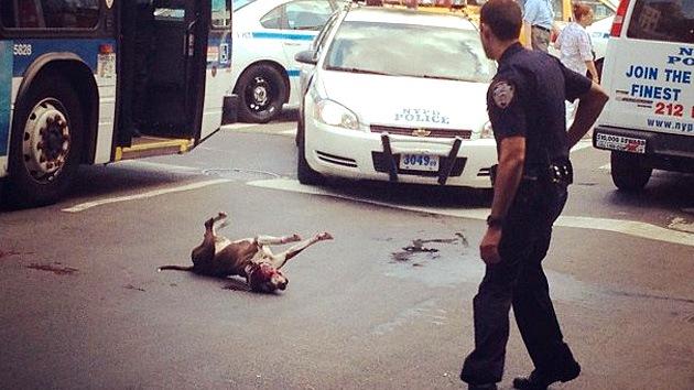 La Policía dispara al perro de un indigente por defender a su amo