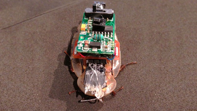 Video: Crean una cucaracha cibernética controlada por Twitter