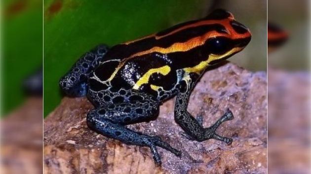 1200 nuevas especies recientemente halladas en el Amazonas