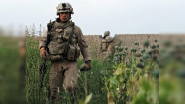 'EE. UU. sigue una política antidrogas errónea en Afganistán'