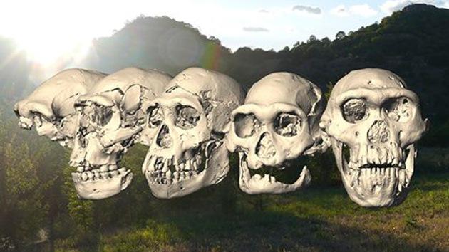 Restos de 'Homo erectus' podrían revolucionar la teoría de la evolución humana