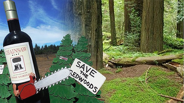 Polémica en EE.UU. por los planes de Codorníu de talar un bosque de secuoyas