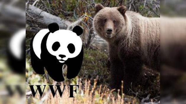 WWF apoya la creación de un nuevo parque ecológico en Rusia
