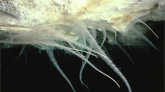 Australia, a la caza de los microbios 'alien' que no salen de su cueva