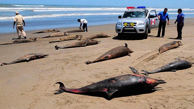 Perú no se explica la muerte de 500 delfines