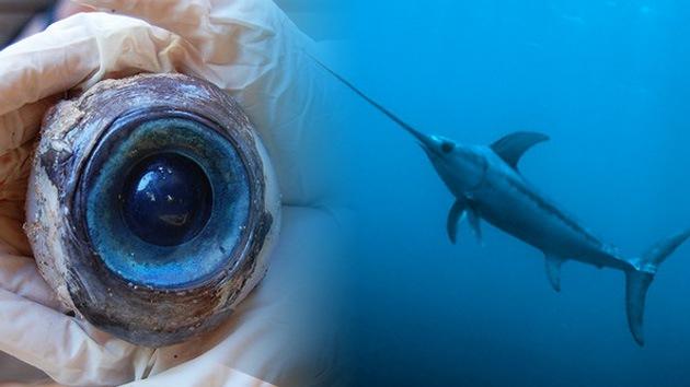 Desvelan el misterio del ojo gigante encontrado en una playa de Florida