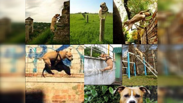 El parkour canino: un éxito ucraniano de repercusión mundial