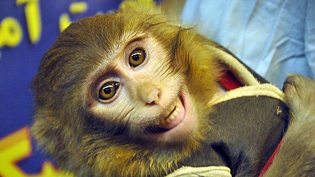 Irán enviará otro mono al espacio