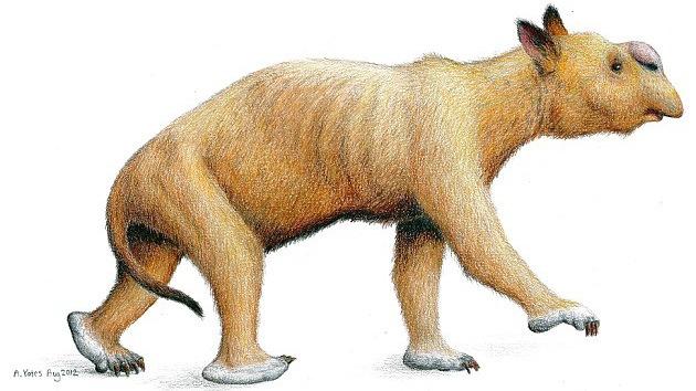 Australia: hallan fósiles de un marsupial prehistórico del tamaño de un elefante
