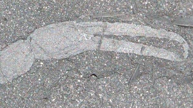 Descubren fósiles del animal más primitivo que habitó el hemisferio sur