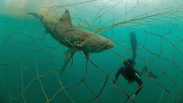 Pesquerías de EE.UU. matan miles de especies protegidas y en peligro de extinción