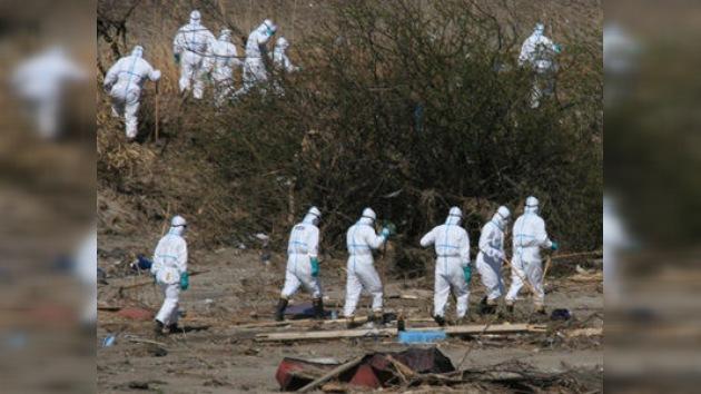 Desinfectarán a los animales domésticos muertos en Fukushima
