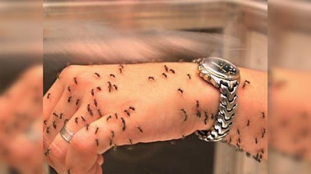 """Mosquitos genéticamente modificados """"aprenden"""" a vacunar contra la malaria"""