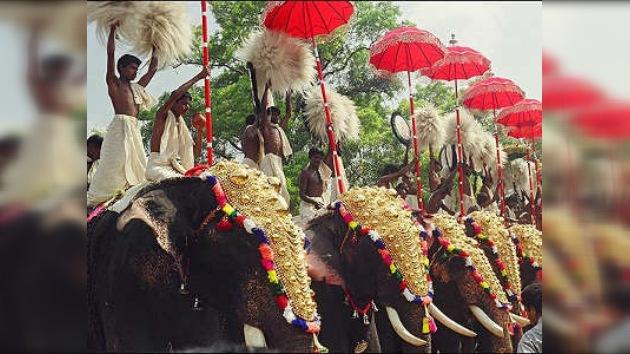 Elefantes locos hicieron fracasar una boda en la India