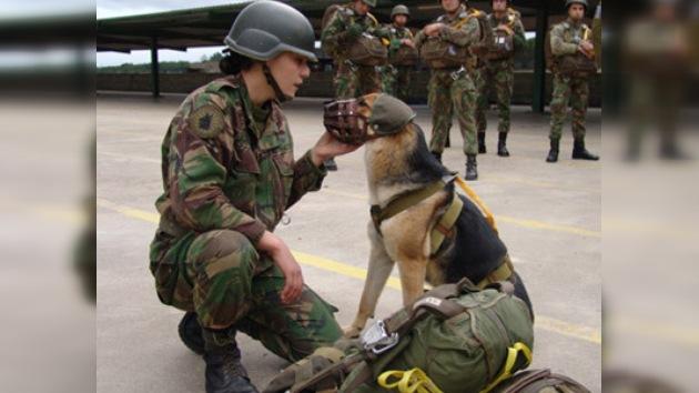 Uso de perros en operativos afganos causa protestas