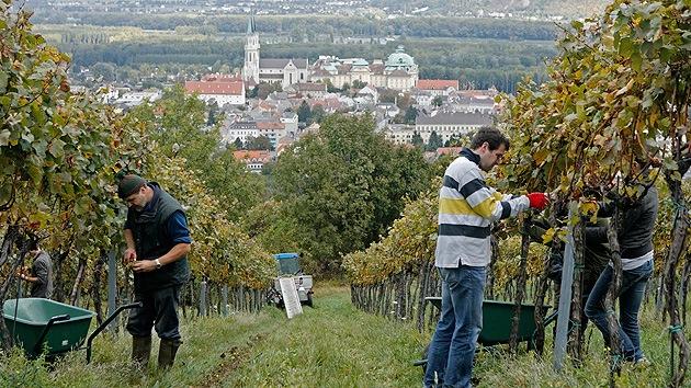 """Agricultores austriacos: """"El embargo ruso es una catástrofe para Europa"""""""