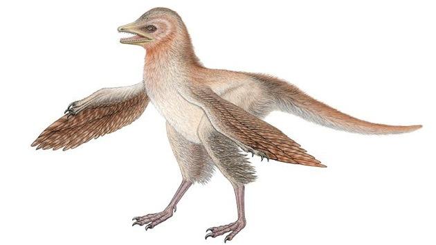 Descubierto un dinosaurio con plumas que cambiará la historia de las aves