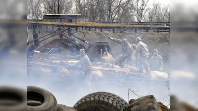 Campaña contra la peste porcina obliga a sacrificar a caballos de un establo