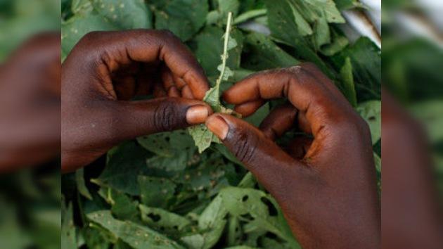 Un alucinógeno africano ayuda a superar las adicciones a las drogas