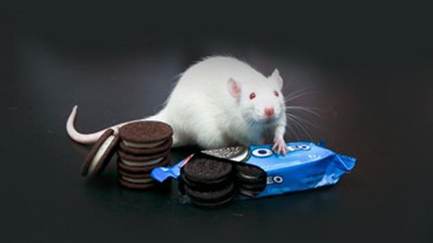 Científicos descubren que las galletas Oreo son tan adictivas como la cocaína
