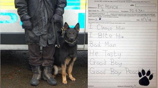 Un perro policia británico obligado a 'escribir' una declaración de testigo para un juicio