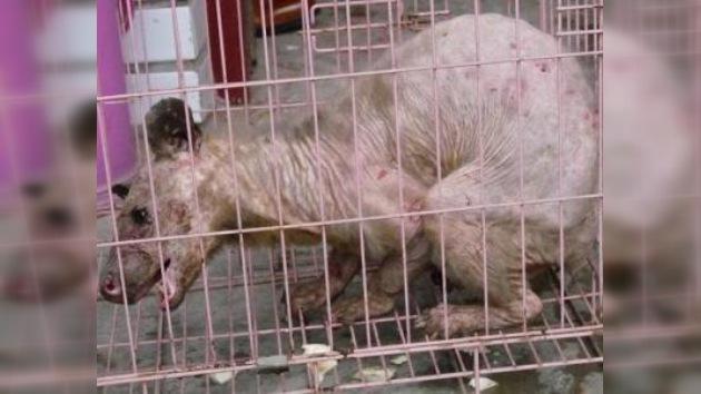 Capturan a una extraña criatura en China