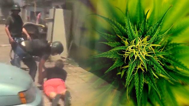 Video: Detienen a una chilena que montó un árbol de Navidad de marihuana