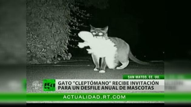 """Dusty, el famoso gato """"cleptómano"""", se prepara para el desfile de mascotas"""