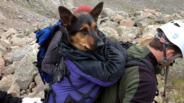 Fotos: Una perra ovejera, rescatada milagrosamente de una altura de 4.000 metros en Colorado