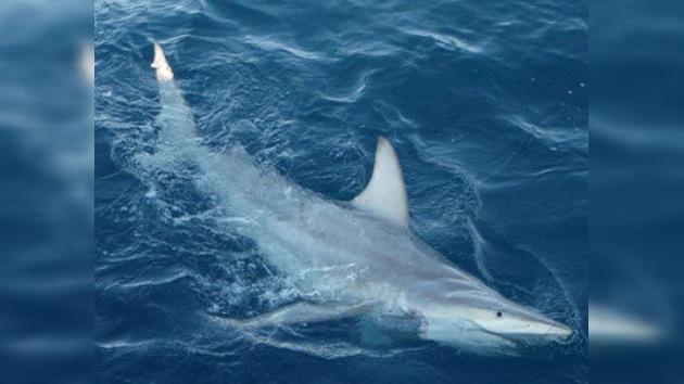 Australia: ¡tiburones mutantes en la costa!