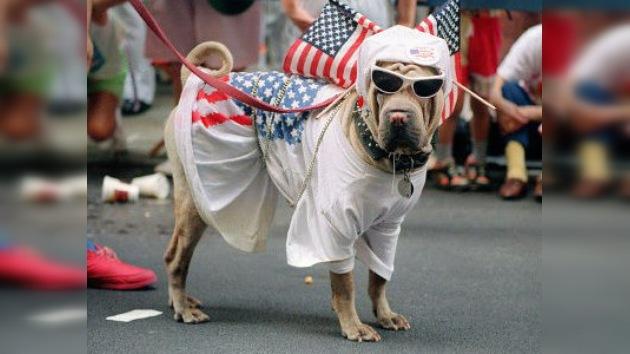 Un elector con mucho morro: registran a un perro para que vote en los comicios de EE.UU.