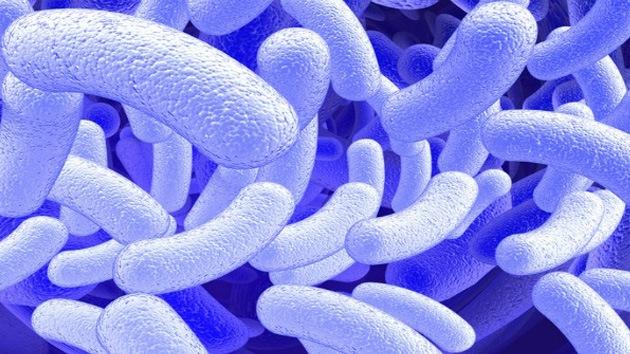 Científicos 'enseñan' a una bacteria a crear combustible