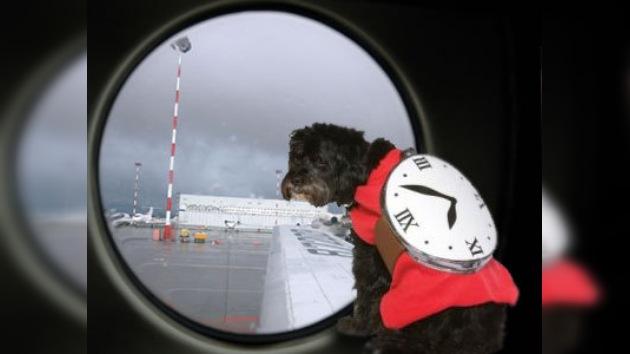 Nuevos métodos terroristas: ataques en aviones a través de 'perros-bomba'