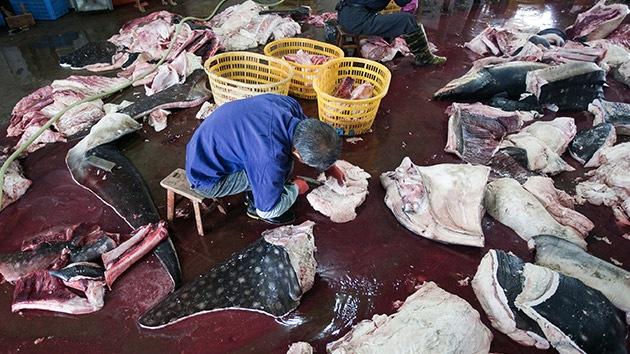 La moda de los productos naturales, ¿un 'arpón' letal para el tiburón ballena?