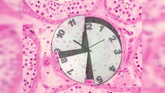 Descubren el gen que 'reinicia' el reloj del envejecimiento